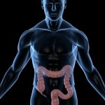 picture of colon in human diagram