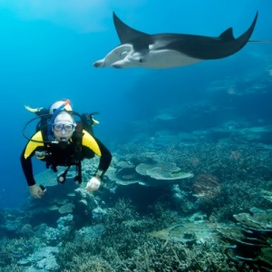 picture of scuba diver with eagle ray underwater