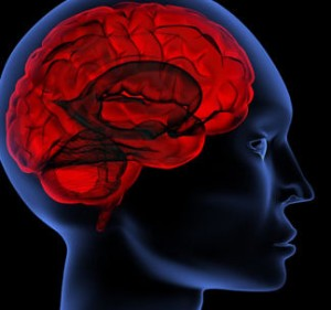 picture of human-brain