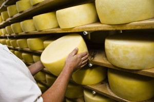 picture of Man inspecting cheese drying in a dairy