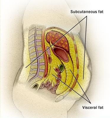 The Viciousness of Visceral Fat