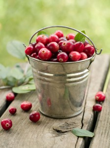picture of Fresh ripe cranberries in bucket. Selective focus