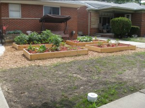 picture of This front yard garden almost landed homeowner Julie Bass in jail for 93 days.