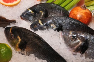 Ciguatera is a food-borne disease found in seafood.