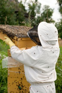 Bee-killing pesticides used popularly with GMO crops have been banned in the EU for two years, while the EPA in the U.S. just approved an even more toxic pesticide for use.