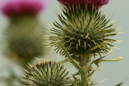 Taking herbal supplements containing Milk Thistle is a natural way to boost glutathione.