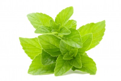 The good news on peppermint