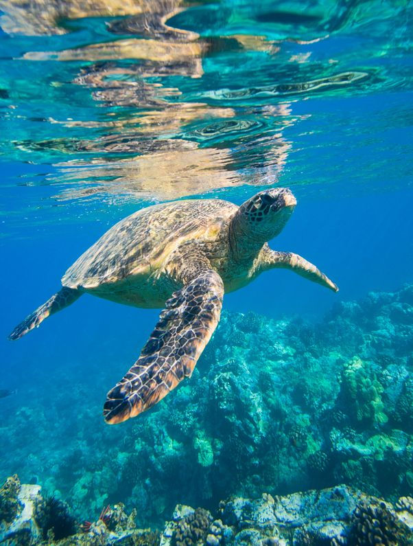 Best Techniques To Get Close To Marine Life
