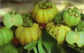 Garcinia Cambogia Extract – Miracle Weight Loss Food